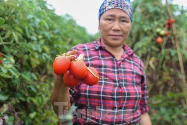 200 tấn rau củ quả 'ế', người dân Hà Nội đổ ngoài đồng ảnh 1