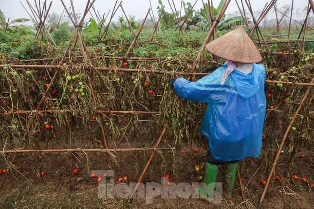 200 tấn rau củ quả 'ế', người dân Hà Nội đổ ngoài đồng ảnh 8