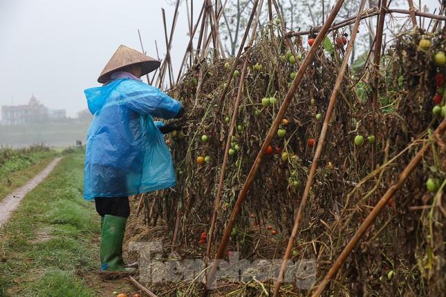 200 tấn rau củ quả 'ế', người dân Hà Nội đổ ngoài đồng ảnh 6