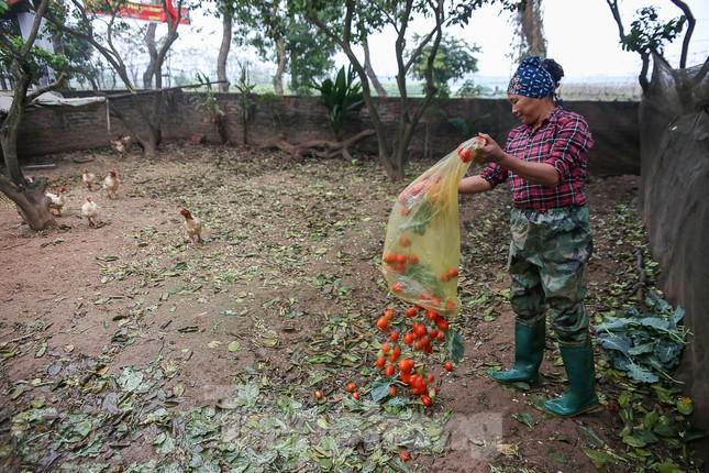 200 tấn rau củ quả 'ế', người dân Hà Nội đổ ngoài đồng ảnh 4