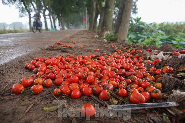 200 tấn rau củ quả 'ế', người dân Hà Nội đổ ngoài đồng ảnh 9