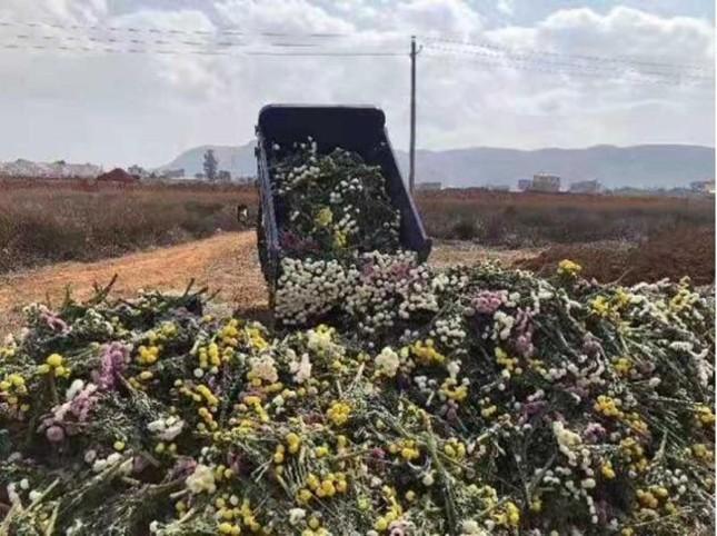 Trung Quốc: Nông dân trồng hoa khốn đốn vì dịch COVID-19 ảnh 1