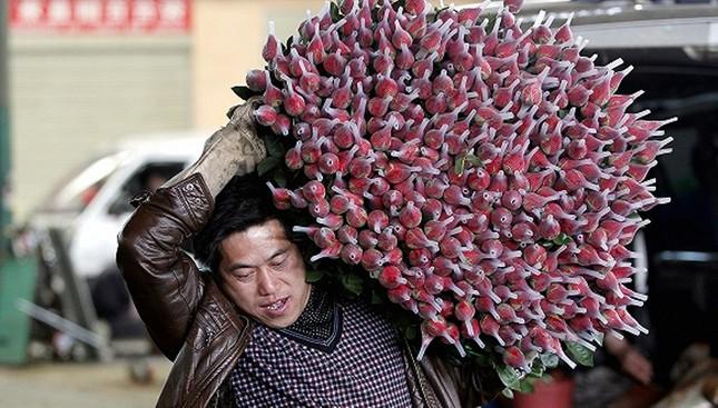 Trung Quốc: Nông dân trồng hoa khốn đốn vì dịch COVID-19 ảnh 2