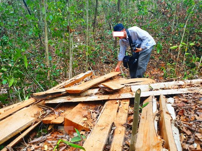 Bức tử rừng giáp ranh Gia Lai-Đắk Lắk: Điều tra, xử lý phá rừng Tây Nguyên ảnh 2
