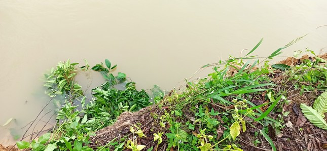 Bất lực nhìn sông Krông Nô 'ngoạm' đất trồng trọt nghiêm trọng ảnh 1