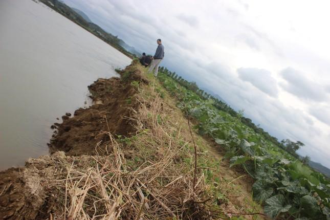 Bất lực nhìn sông Krông Nô 'ngoạm' đất trồng trọt nghiêm trọng ảnh 2