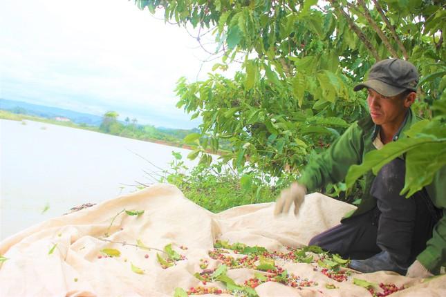 Bất lực nhìn sông Krông Nô 'ngoạm' đất trồng trọt nghiêm trọng ảnh 5