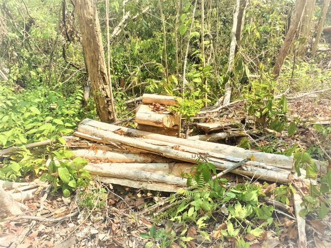 Công an điều tra vụ phá rừng nghiêm trọng ở Đắk Lắk ảnh 1