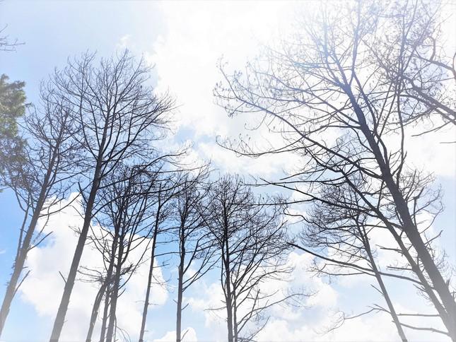 Đắk Nông: Vì sao nhiều vụ xâm hại rừng thông phải đình chỉ điều tra? ảnh 2