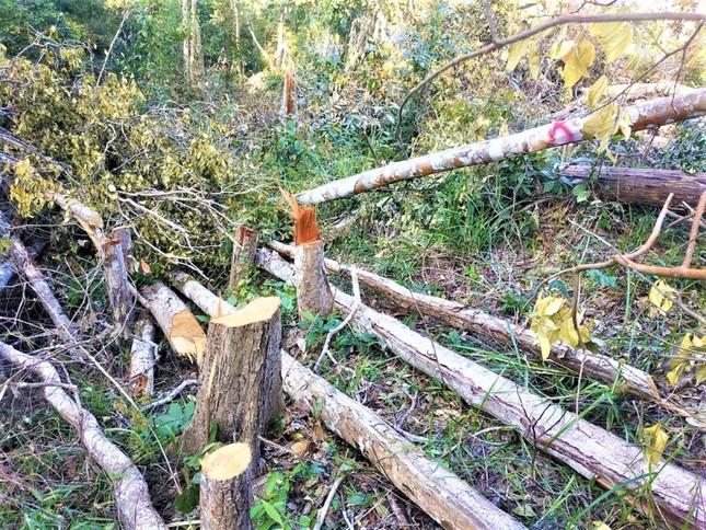 Hơn 400 vụ vi phạm lâm luật, Đắk Nông dẫn đầu Tây Nguyên về phá rừng ảnh 1