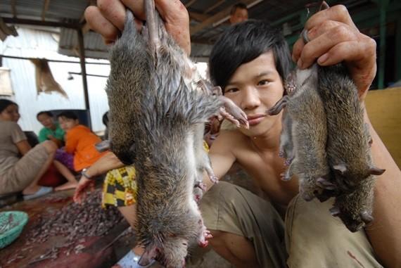 Độc đáo nghề 'thổi nước' vào hang bắt chuột đồng ở miền Tây ảnh 15