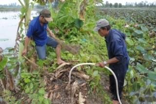Độc đáo nghề 'thổi nước' vào hang bắt chuột đồng ở miền Tây ảnh 4