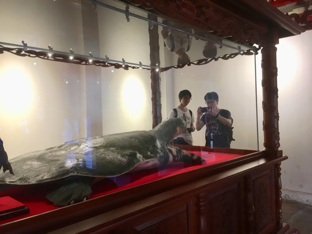 Tiêu bản cụ rùa Hồ Gươm cuối cùng thu hút người dân Thủ đô ảnh 2