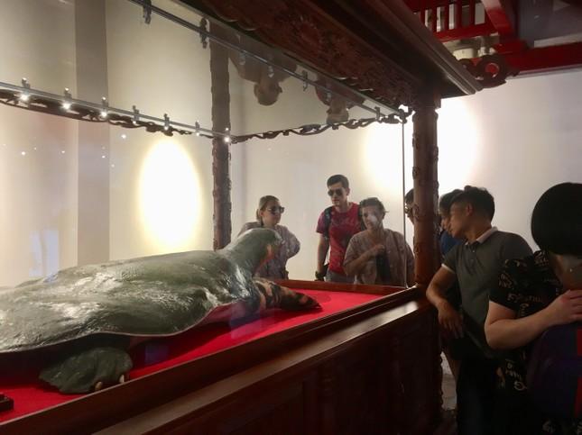 Tiêu bản cụ rùa Hồ Gươm cuối cùng thu hút người dân Thủ đô ảnh 4