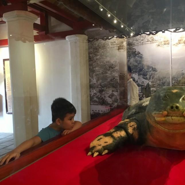 Tiêu bản cụ rùa Hồ Gươm cuối cùng thu hút người dân Thủ đô ảnh 7
