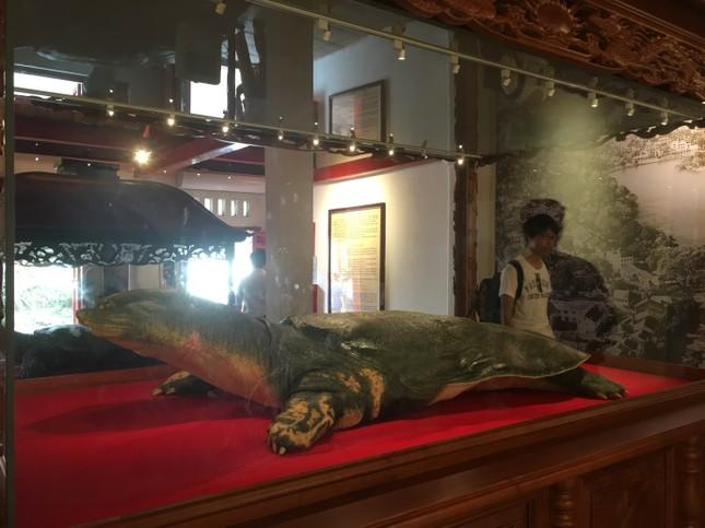 Tiêu bản cụ rùa Hồ Gươm cuối cùng thu hút người dân Thủ đô ảnh 1