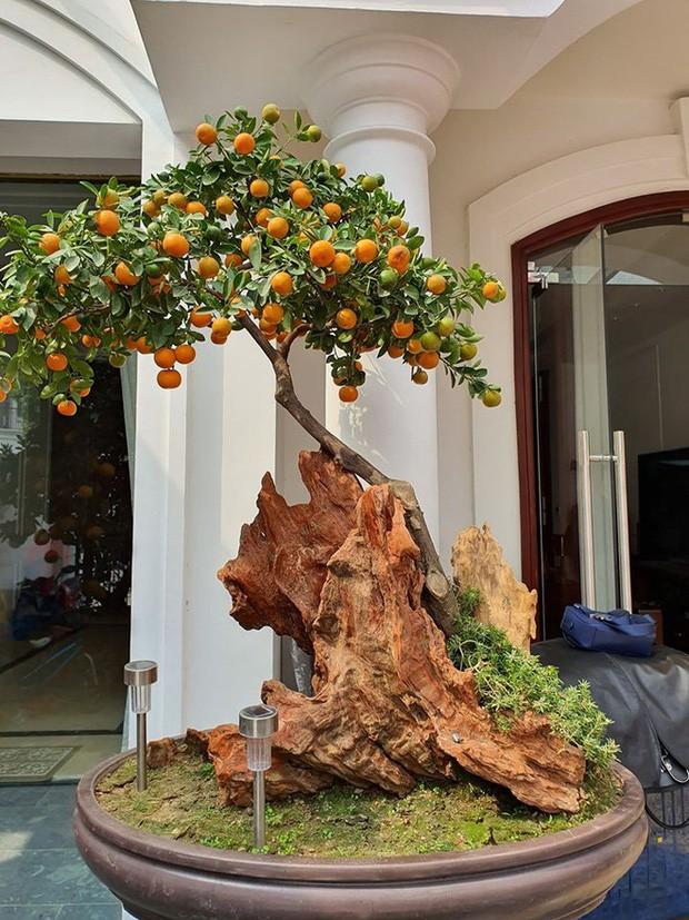 Sao Việt trang hoàng nhà cửa rực rỡ đào mai đón Tết ảnh 1