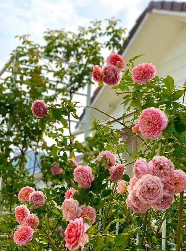 Bất ngờ về khu vườn 'trong mơ' trên sân thượng của gia đình Quyền Linh ảnh 9
