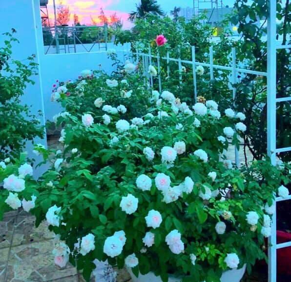 Bất ngờ về khu vườn 'trong mơ' trên sân thượng của gia đình Quyền Linh ảnh 12