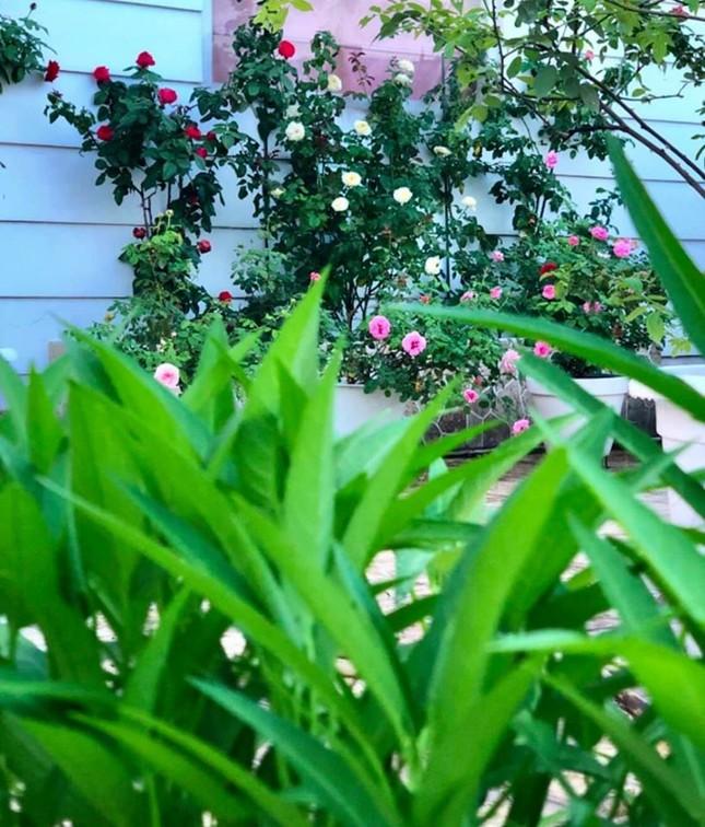 Bất ngờ về khu vườn 'trong mơ' trên sân thượng của gia đình Quyền Linh ảnh 13