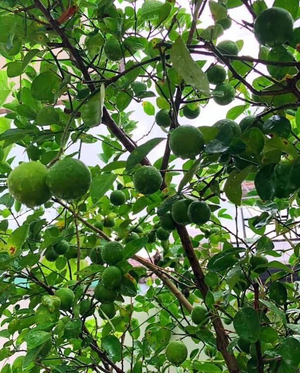Bất ngờ về khu vườn 'trong mơ' trên sân thượng của gia đình Quyền Linh ảnh 4