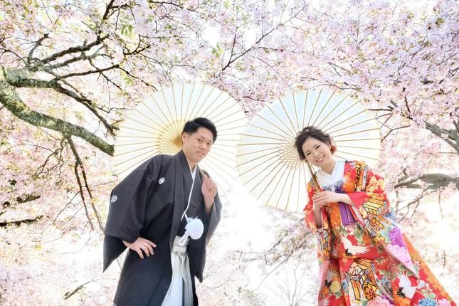 Lạc vào xứ sở thần tiên trong vườn hoa anh đào ở Nhật Bản ảnh 4