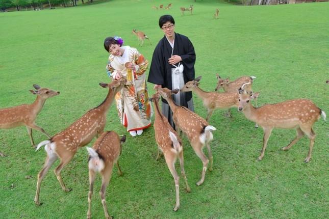 Lạc vào xứ sở thần tiên trong vườn hoa anh đào ở Nhật Bản ảnh 3