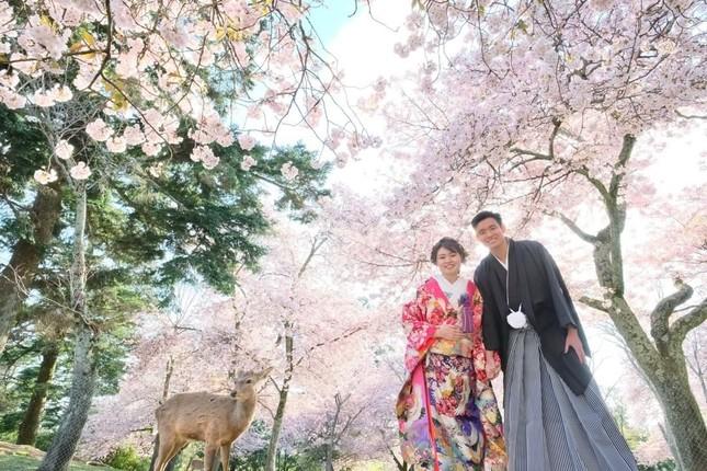 Lạc vào xứ sở thần tiên trong vườn hoa anh đào ở Nhật Bản ảnh 1