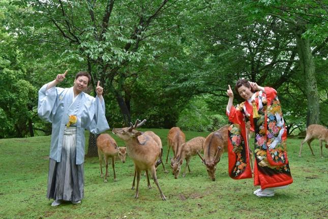 Lạc vào xứ sở thần tiên trong vườn hoa anh đào ở Nhật Bản ảnh 7