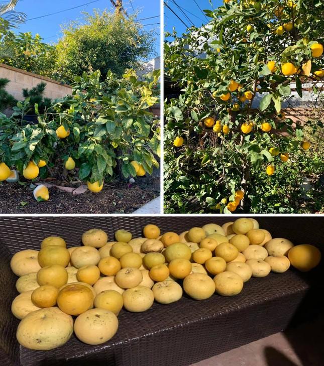 'Lóa mắt' với vườn cây sai trĩu quả của Bằng Kiều ở Mỹ ảnh 5