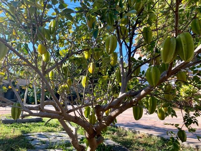 'Lóa mắt' với vườn cây sai trĩu quả của Bằng Kiều ở Mỹ ảnh 4