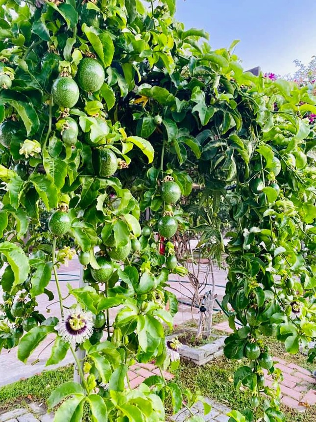'Lóa mắt' với vườn cây sai trĩu quả của Bằng Kiều ở Mỹ ảnh 3