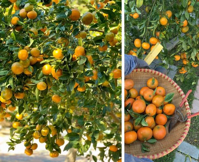 'Lóa mắt' với vườn cây sai trĩu quả của Bằng Kiều ở Mỹ ảnh 6