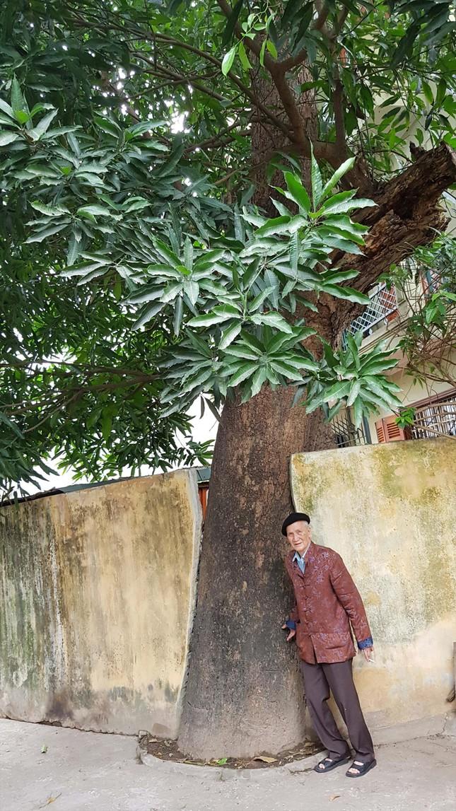 Chín cây muỗm nghìn năm ở đền Voi Phục ảnh 1