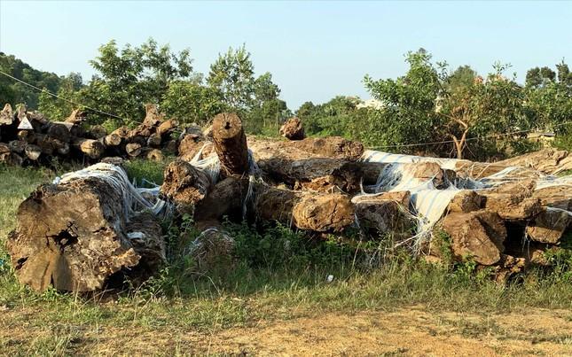 Vụ án 'khủng' ở Lâm Đồng: Gần 200 ha rừng 'bốc hơi' như thế nào? ảnh 1