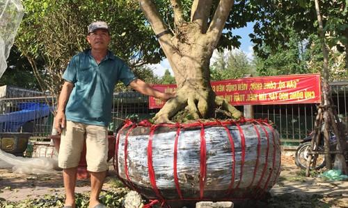 Thêm cây mai hơn 100 tuổi giá 2 tỷ xuất hiện ở chợ Tết Cần Thơ ảnh 1