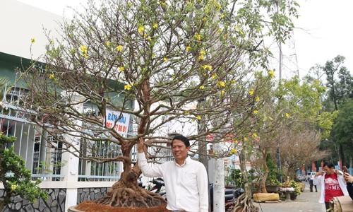 Thêm cây mai hơn 100 tuổi giá 2 tỷ xuất hiện ở chợ Tết Cần Thơ ảnh 2
