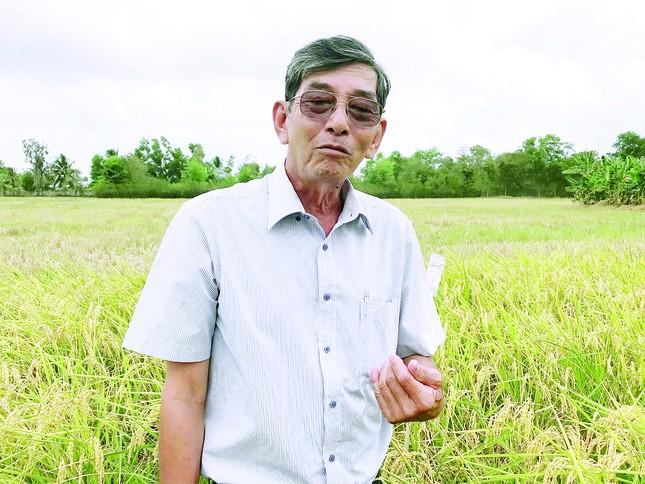 Con đường gạo Việt Nam đoạt ngôi vương thế giới ảnh 1