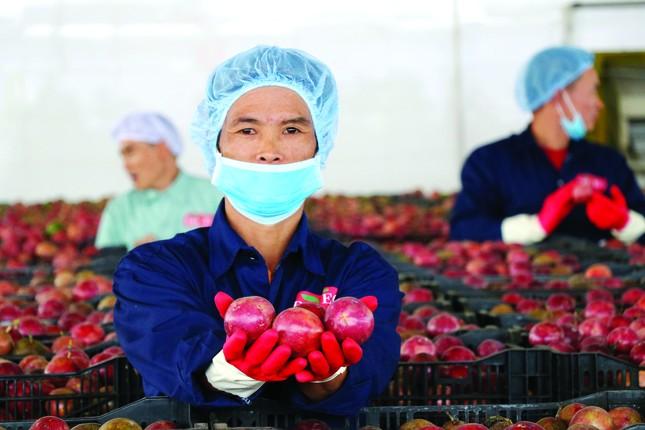 DOVECO: Bà đỡ cho nông nghiệp hiện đại, bền vững ảnh 1