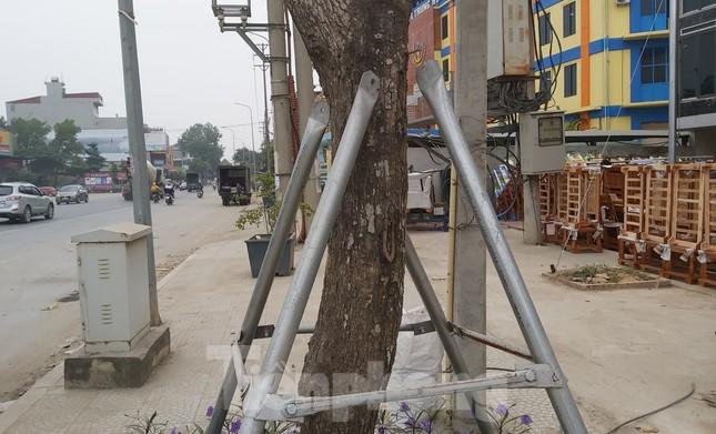 Huyện Thạch Thất nói gì về hàng ngàn cọc chống cây xanh mới làm đã gãy đổ? ảnh 1