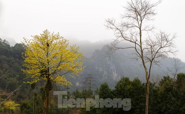 Hoa cải nhuộm vàng núi đá Hà Giang ảnh 9