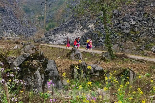 Hoa cải nhuộm vàng núi đá Hà Giang ảnh 2