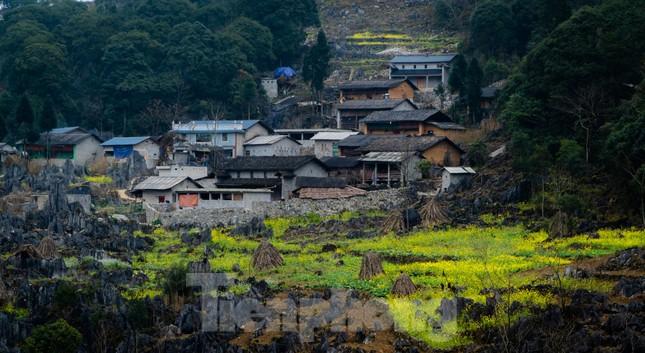 Hoa cải nhuộm vàng núi đá Hà Giang ảnh 6