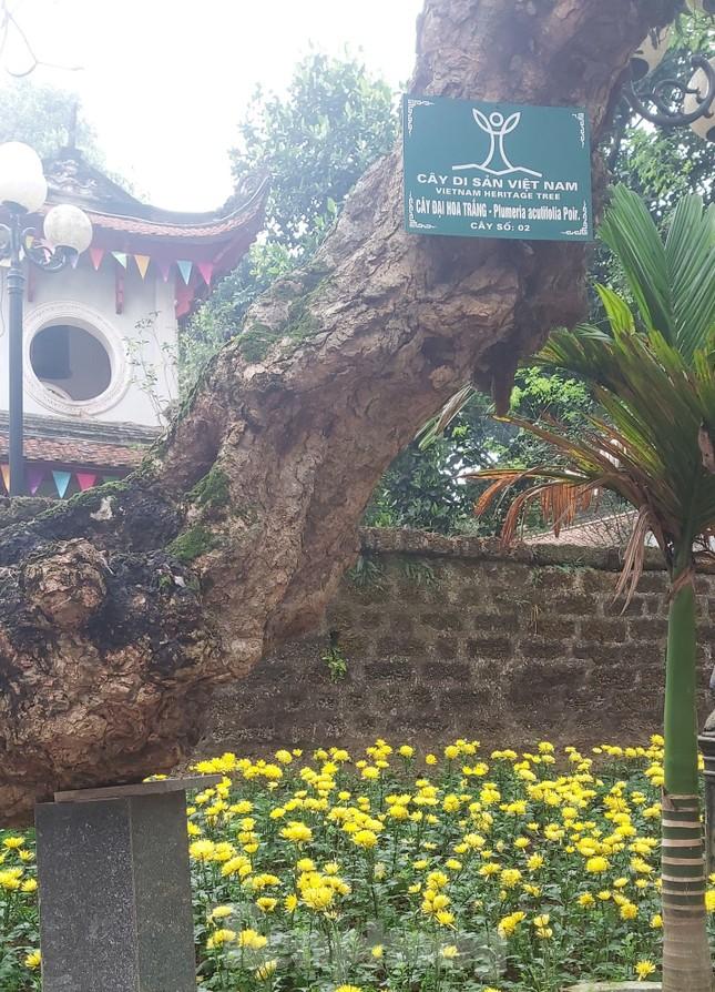 Khám phá rừng lim độc đáo, hơn nghìn năm tuổi tại Hà Nội ảnh 12