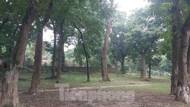 Khám phá rừng lim độc đáo, hơn nghìn năm tuổi tại Hà Nội ảnh 1