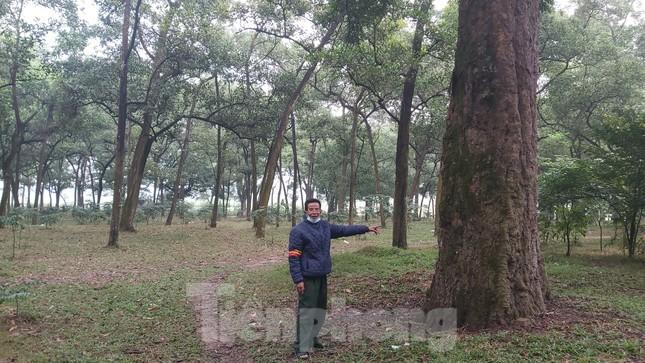 Khám phá rừng lim độc đáo, hơn nghìn năm tuổi tại Hà Nội ảnh 3