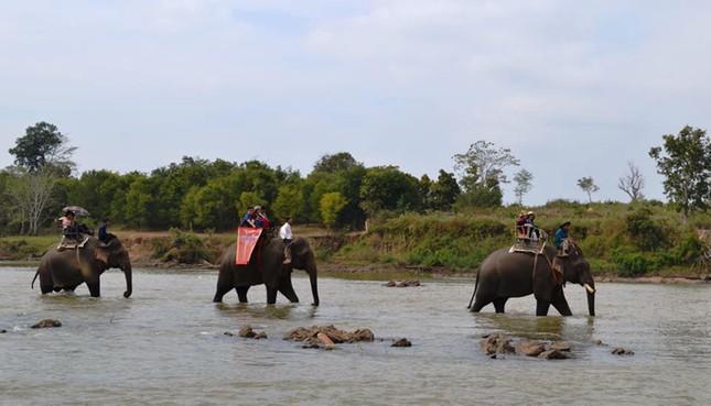 Truyền thống của đồng bào bản địa Tây Nguyên không có đua voi ảnh 4