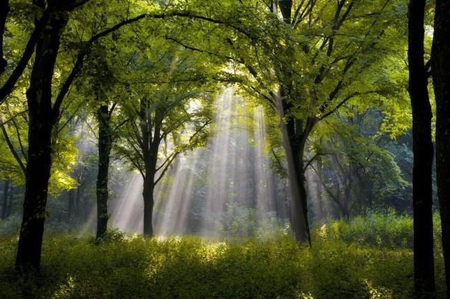 Khoảng khắc thanh bình của thiên nhiên ảnh 13