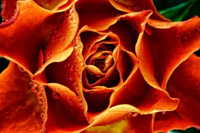 Cận cảnh các loài hoa đẹp lung linh ảnh 8