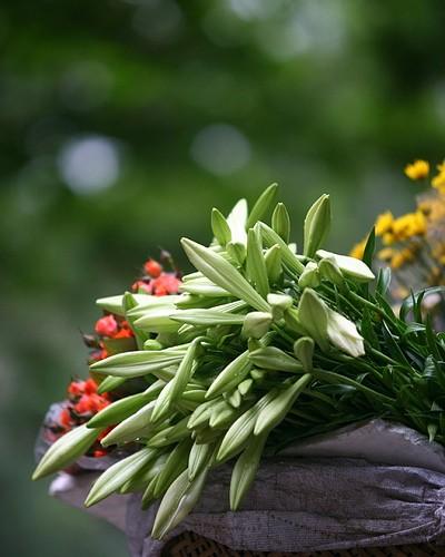 Loài hoa mang dấu ấn tình yêu Hà Nội ảnh 9